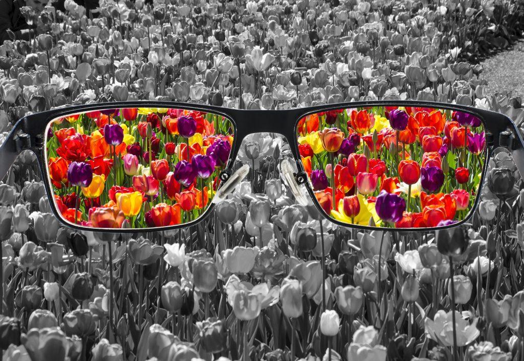 Arte com foto em tons de preto, branco e cinza de uma plantação de tulipas. No centro da imagem há um grande par de óculos com armação preta e nas lentes é possível ver a imagem das mesmas tulipas só que coloridas em tons de roxo, vermelho, amarelo, laranja e verde.